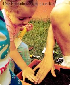 Ayudando a papá a colocar las semillas