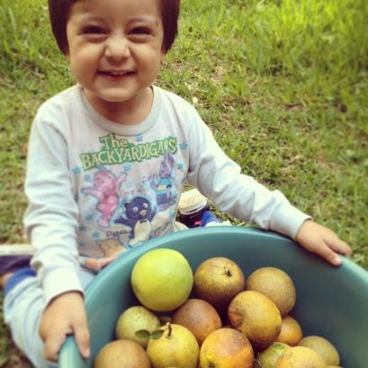 Bobby feliz con la cosecha de naranjas